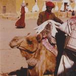 Camel riding, Rajistan, India