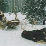 Sled dogs, Chena, Alaska USA
