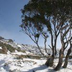 Snowy Mountains, Australia (2)